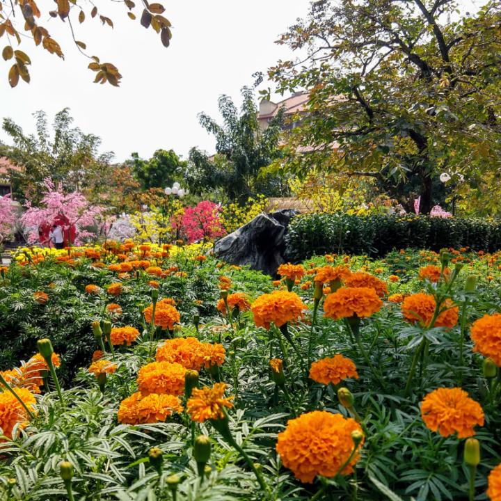Flowers Tet Vietnam Holiday