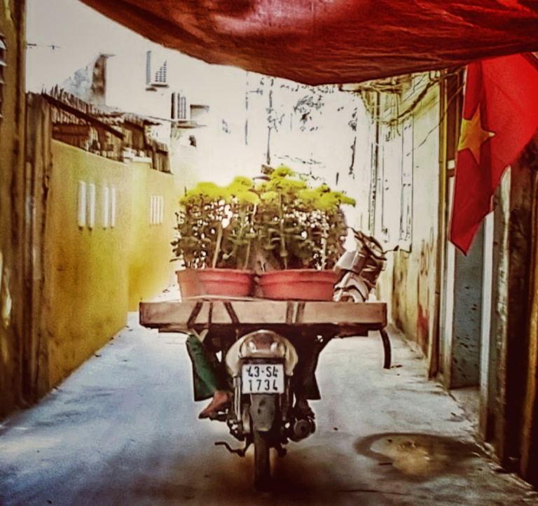 Tet in Vietnam Spring, New Year, Flowers and Vietnamese flags.