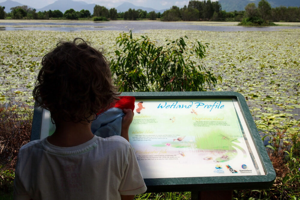 Things to do in Cairns with kids visit Catana wetlands