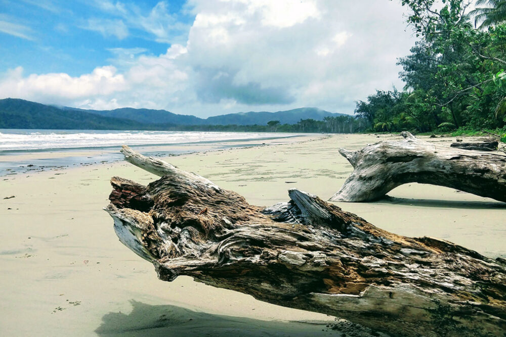 Things to do in Cairns with kids visit the Daintree