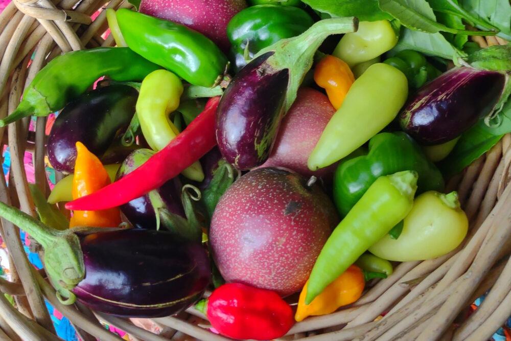 Thai ingredients from the garden