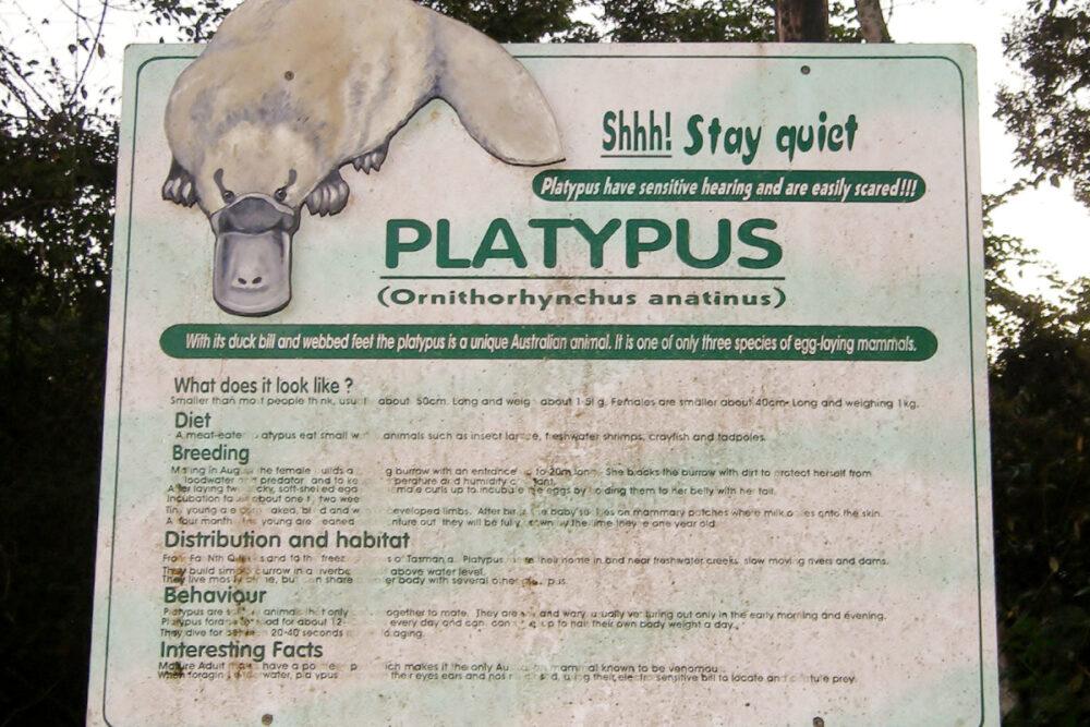 australian platypus can you eat duckbill platypus